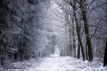 Paysage d'hiver en Drenthe sur Karijn | Fine art Natuur en Reis Fotografie