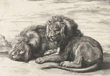 Zwei liegende Löwen von Abraham Bloteling, nach Peter Paul Rubens, 1655 - 1690