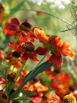 Rode bloemen vangen de zon van Daan Hartog
