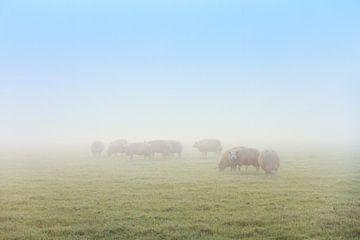 Schapen in de mist met blauwe lucht van
