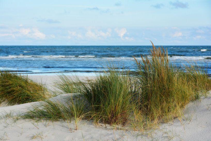 northern beach van Joachim G. Pinkawa