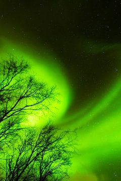 Nordlicht Norwegen Lofoten