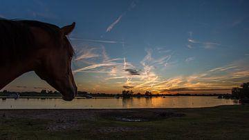 Sunsetlover van Michel de Koning