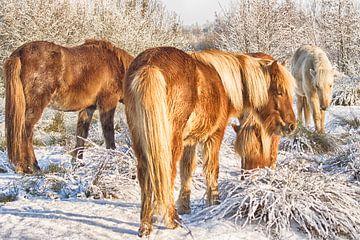 Paarden in de sneeuw van Egon Zitter