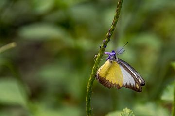 Vlinder van Inge Heeringa