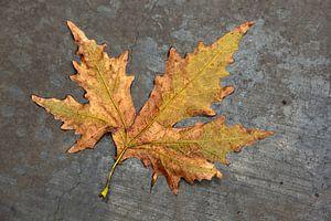 Feuilles d'automne sous la pluie sur du béton gris.