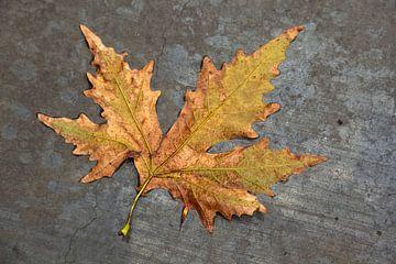 Herfstblad in de regen op grijs beton. van Eyesmile Photography