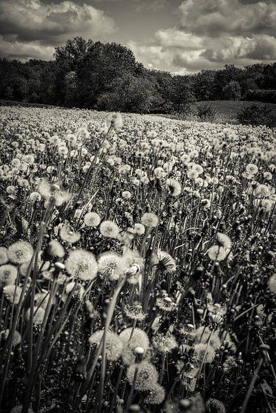 Ein Meer aus Pusteblumen van Hannes Cmarits