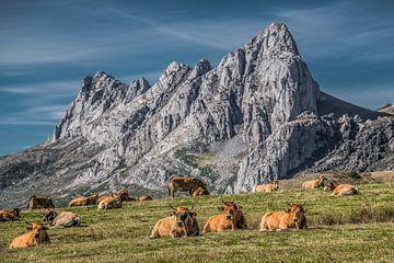 Berglandschaft in Nordspanien mit Kühen im Vordergrund von Harrie Muis