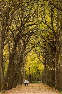 Wandelaars in het bos van