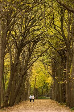 Wandelaars in het bos van Marcel Klootwijk