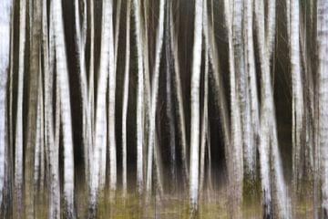 Bäume verschieben von Jeroen Linnenkamp