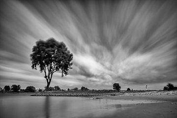 Eenzame boom op een strekdam langs de Lek (Zwart-wit) van
