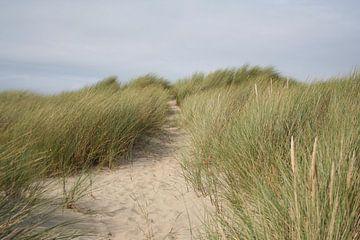 Zeeland duinen van Lisa Hartjes