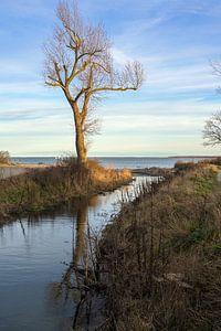 Estuarium van een zoetwaterstroom die uitmondt in de Oostzee, landschap met water, kale boom en blau