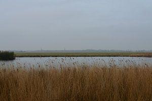 Broekpolder uitzicht op Maasland
