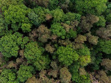Vue de dessus des arbres sur Cynthia Hasenbos