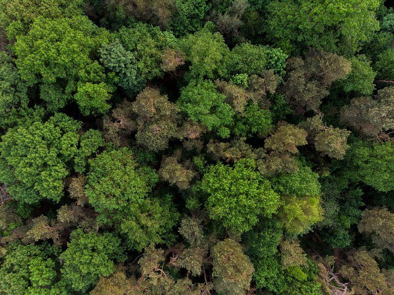 Bovenaanzicht van bomen van Cynthia Hasenbos