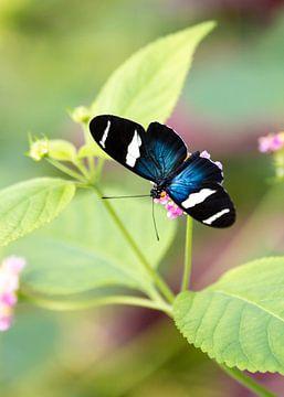 Blauwe vlinder van Marco de Waal