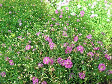 Bloemen van Pictures Of Nature
