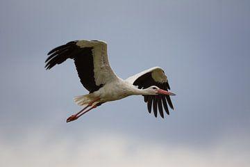 Storch am Himmel von Tobias Luxberg