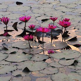 Fuchsia lotussen Angor Wat sur Lotte Veldt