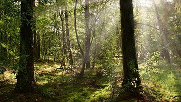 Ein Morgen in der Natur von Günter Albers