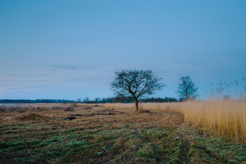 Karakteristieke boom aan de waterkat van Wilko Visscher