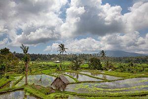 Bali rijstterrassen. De mooie en dramatische rijstvelden. Een echt inspirerend landschap.