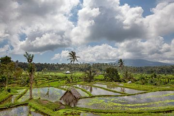Bali Reisterrassen. Die schönen und dramatischen Reisfelder. Eine wirklich inspirierende Landschaft. von Tjeerd Kruse