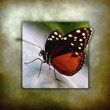 Schmetterling   |   Monarch-Falter von Dirk H. Wendt