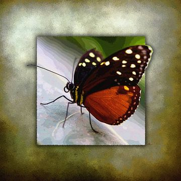 Vlinder | Monarch Butterfly van Dirk H. Wendt