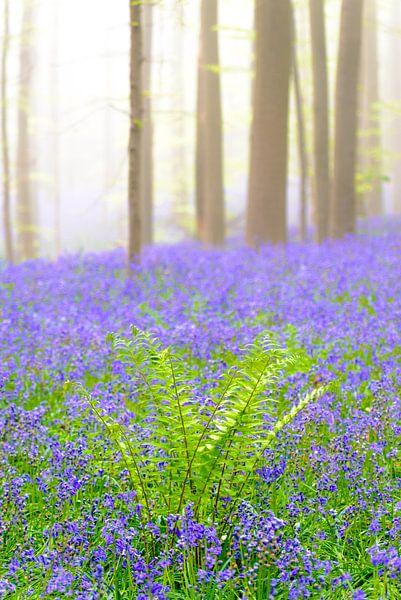 Varen tussen de hyacinten