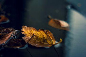 De levendige kleur van het herfstblad van Joeri Mostmans