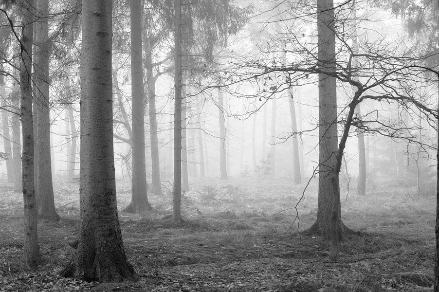 Mist in het bos van Gonnie van de Schans