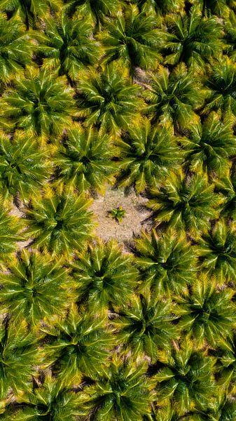 The little palmtree van Jordi Sloots