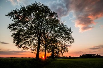 Sonnenuntergang durch die Bäume auf einem Feld. von Jaap de Wit