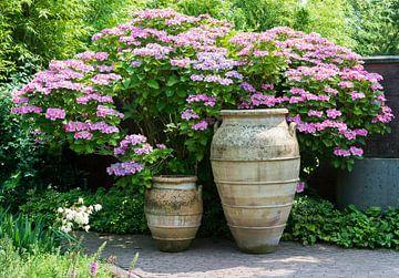 big vases with hydrangea hortensia background von Compuinfoto .