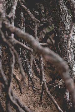 Naturfoto von alten Bäumen mit sichtbaren Wurzeln von Frank van Hulst