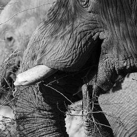 black and white of elephant von Marieke Funke