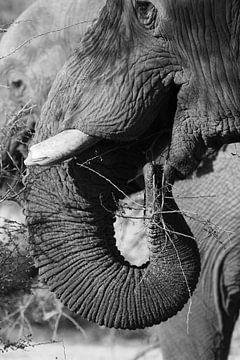 zwart wit olifant von Marieke Funke