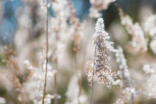 Rustgevende scherpte diepte in bloemenveld