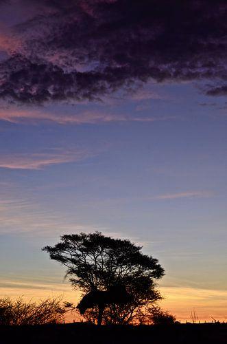 African Tree at Sunset van