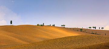Zypressen in der Crete Senesi in der Toskana