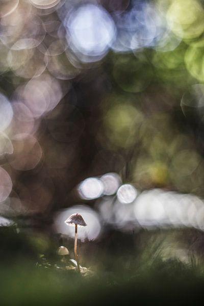 Magical light van Bob Daalder