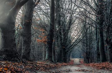 Magic Forest van Sidney Portier
