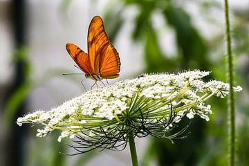 Oranje vlinder von STEVEN VAN DER GEEST