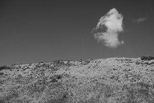 Zeeland - Dünen