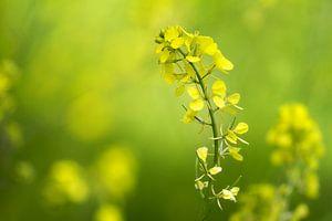 Gele bloem van Renald Bourque