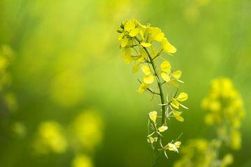 Gelbe Blume von Renald Bourque
